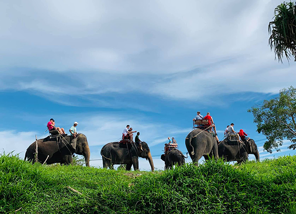 Elephant Trekking and Bareback riding